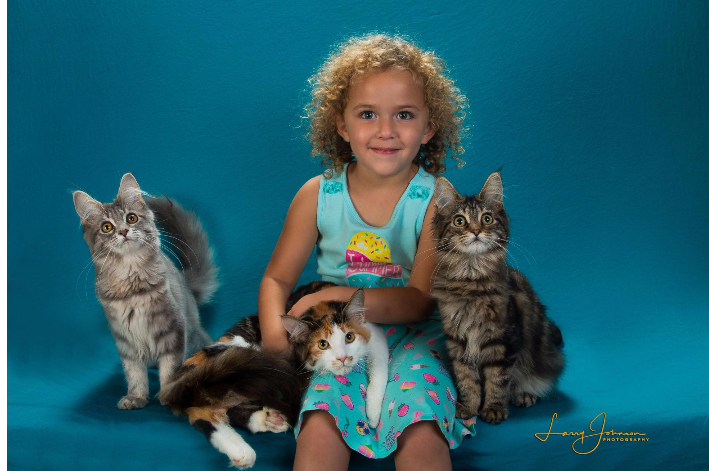 Maine Coon Cats and Kittens Florida